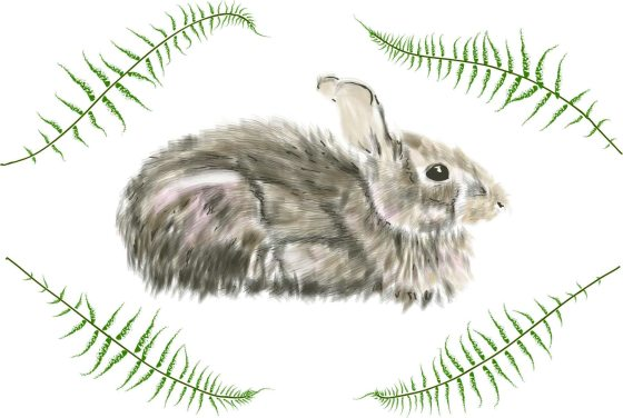 Rabbit and Ferns