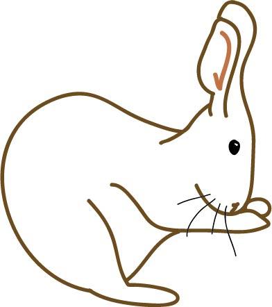 rabbit.illustration