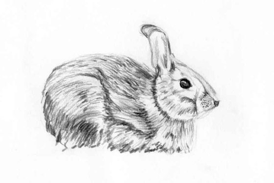 rabbit_sketch005